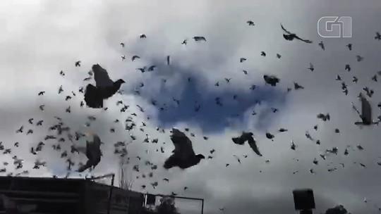 Ação com revoada de pombos presta apoio à vítimas de João de Deus contra exploração sexual