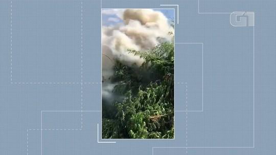 Plantação com nove toneladas de maconha é erradicada na Bahia; proprietário é procurado