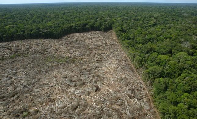 Floresta derrubada na Amazônia