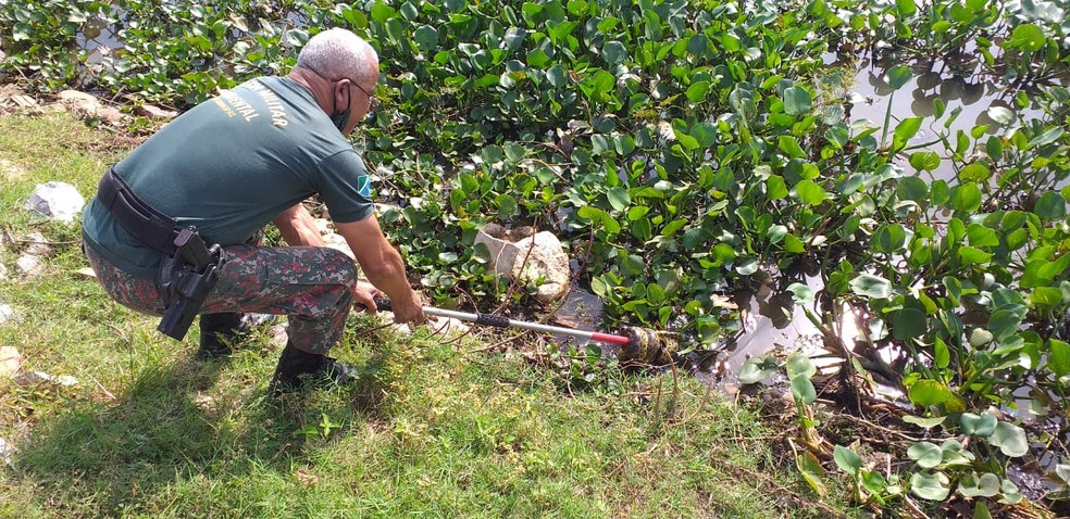 Sucuri estava sadia e foi solta em rio de MS, segundo a PMA — Foto: PMA/Divulgação