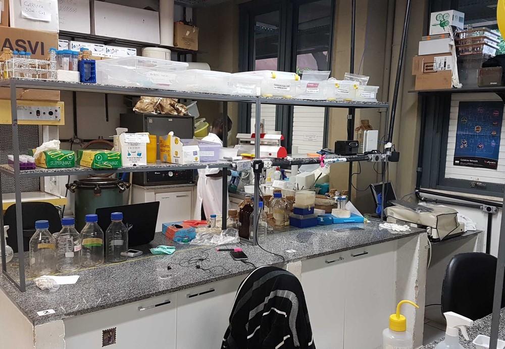 Possível corte de bolsas do CNPq ameaça pesquisa da UFMG de combate ao vírus da dengue  - Notícias - Plantão Diário