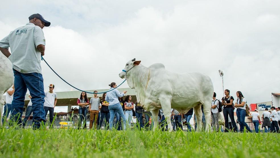 Feira agropecuária deve movimentar R$ 250 milhões neste ano — Foto: ABCZ/Divulgação