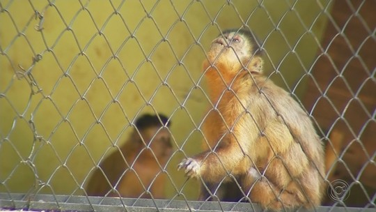 Prefeitura de Catanduva investiga morte de macaco em zoológico