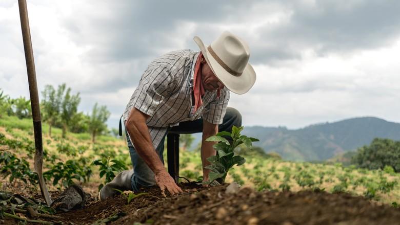 agricultor agricultura produção colheita  (Foto: Getty Images)