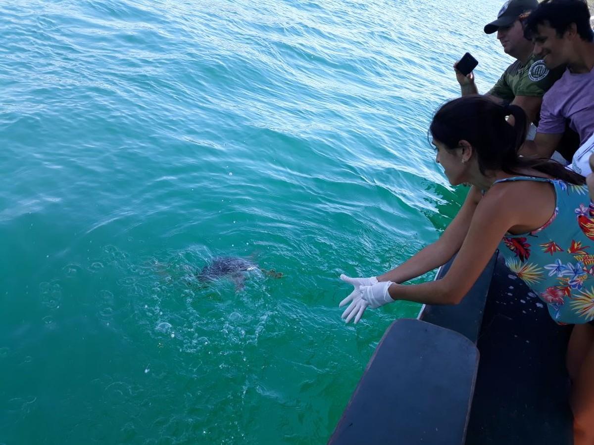 Tartaruga é solta no mar após três cirurgias para remoção de tumores em 5 meses de tratamento no RJ
