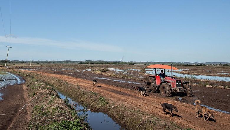 Arroz orgânico dos assentados no Rio Grande do Sul (Foto: Marcelo Curia)