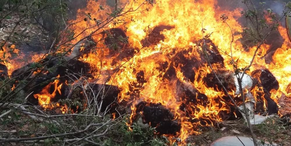 Maconha foi incinerada em Floresta — Foto: Polícia Federaç/Divulgação