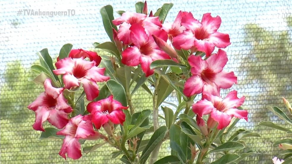 Flores são consideradas exóticas e fazem sucesso como plantas ornamentais — Foto: Reprodução/TV Anhanguera