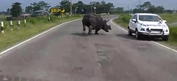 Rinoceronte assusta motoristas em estrada na Índia (Foto: Reprodução)