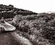 Obra fotográfica de Ricardo Martins retrata história e ciclo do café