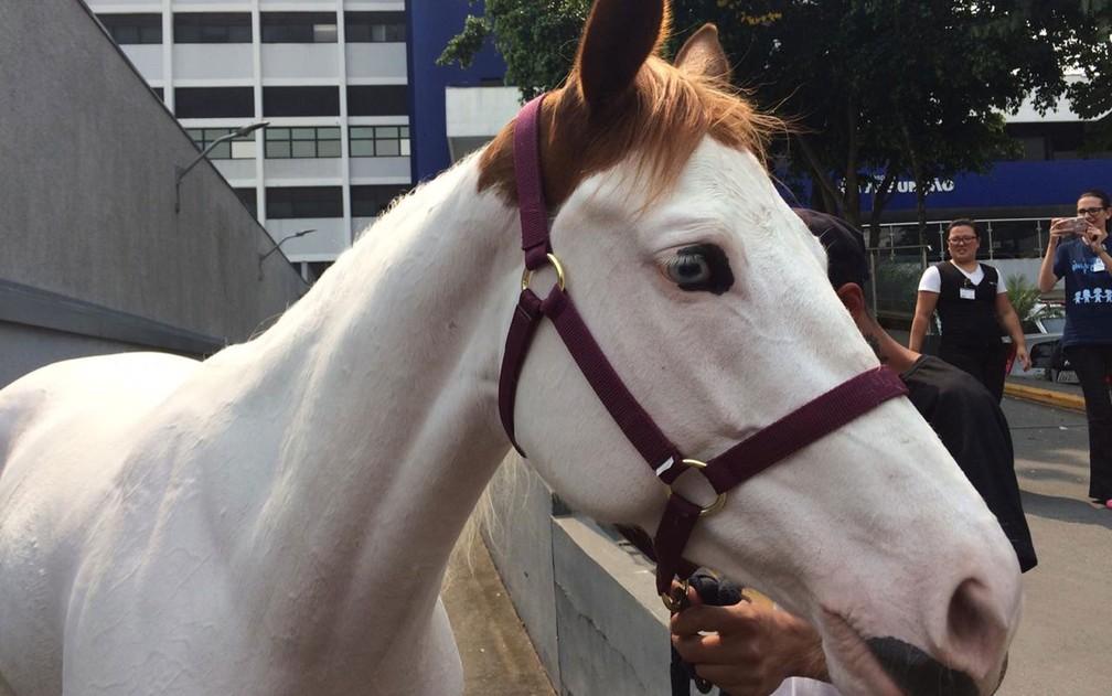 Égua Lady Bela recebeu banho e tratamento especial para poder se encontrar com o menino — Foto: Glauco Araújo/G1