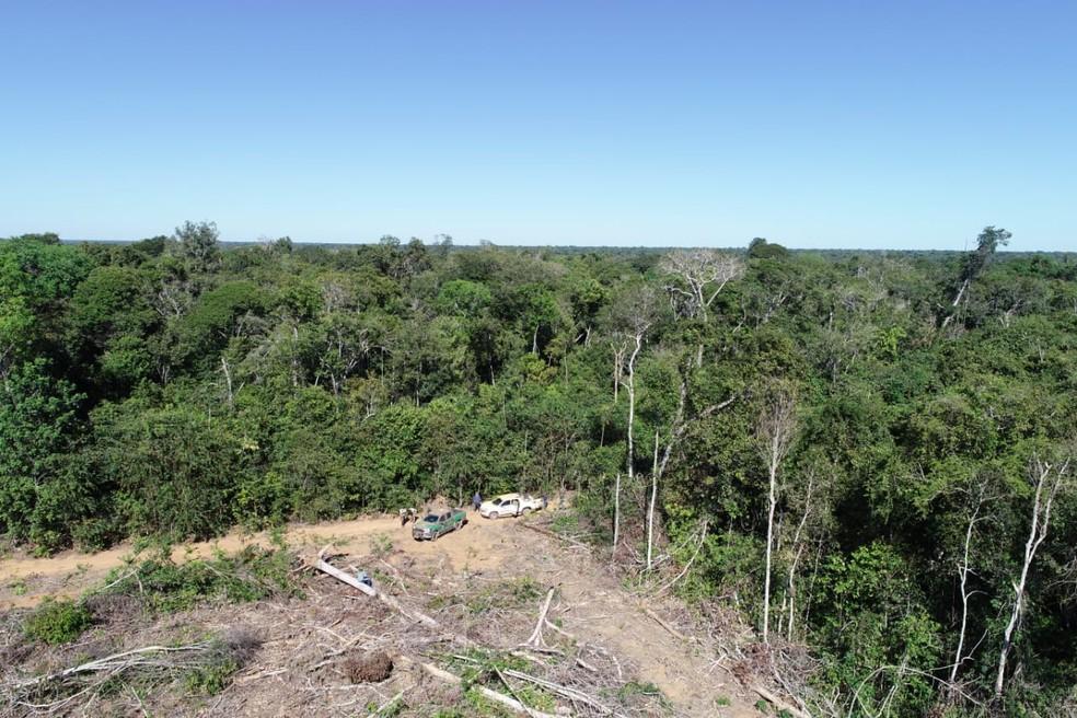 Áreas de floresta eram omitidas em documentação (Foto: Ibama/Divulgação)