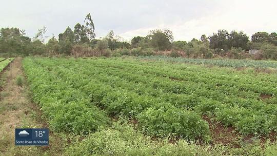 Agricultores buscam alternativas para evitar prejuízos durante geadas na região de Ribeirão Preto