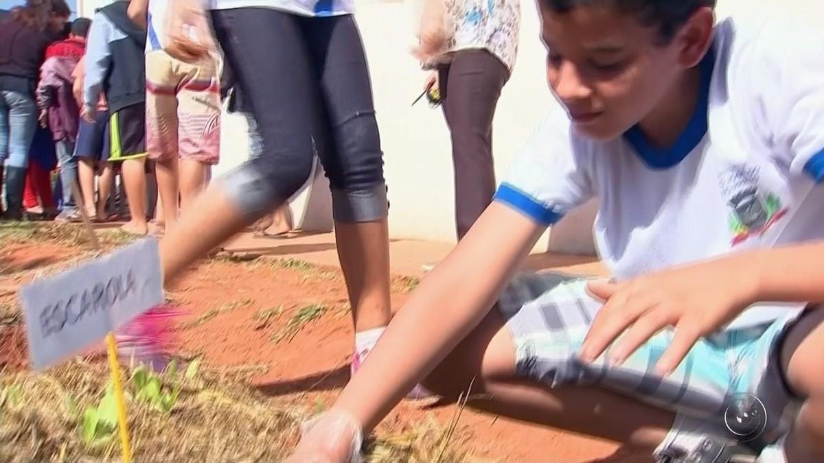 Horta comunitária em escola traz conhecimento interdisciplinar a alunos