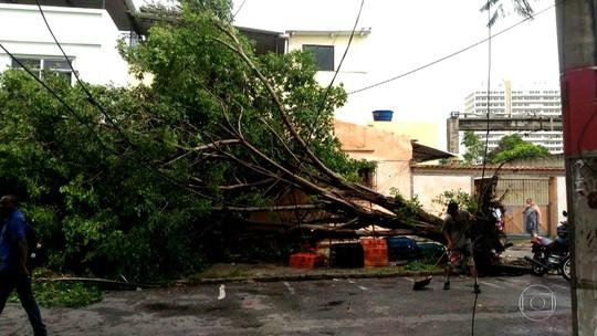 Moradores de Marechal Hermes, na Zona Norte, reclamam da falta de poda de árvores