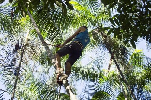 peconheiro-açai-extrativismo-amazonia (Foto: Divulgação)