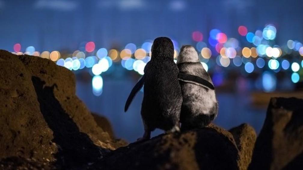 Registro feito pelo fotógrafo Tobias Baumgaertner em Melbourne, Austrália — Foto: Tobias Baumgaertner