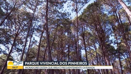 Plantação de pinheiros em frente ao Paranoá preocupa moradores