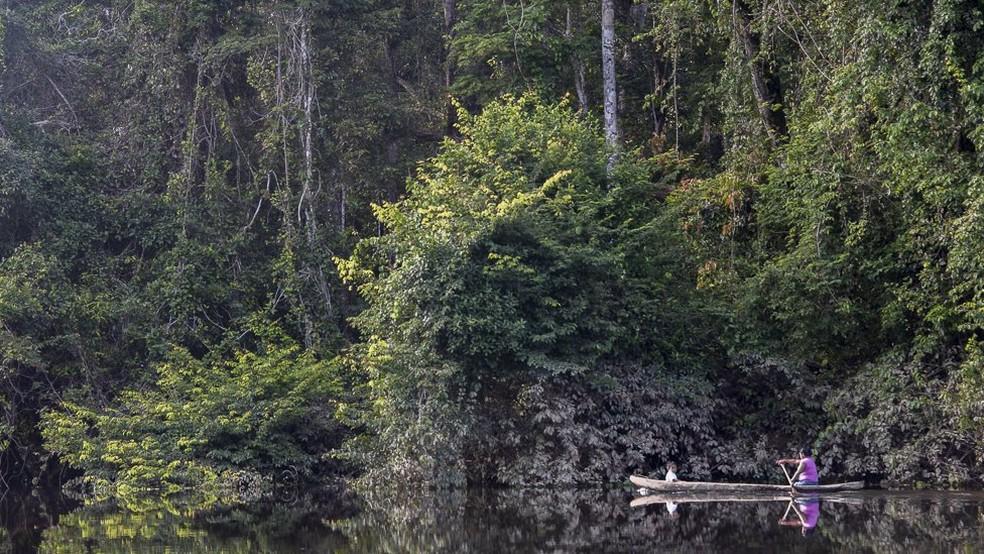 Guiana conta com 75% do território coberto pela floresta amazônica (Foto: Andrew Snyder/Global Wildlife)