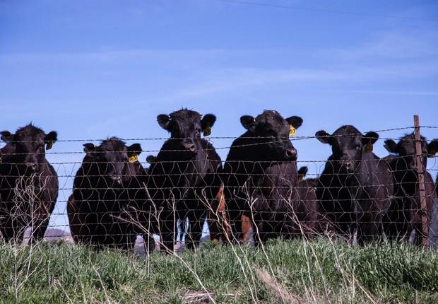 Rebanho de animais no campo (Foto: Pexels)