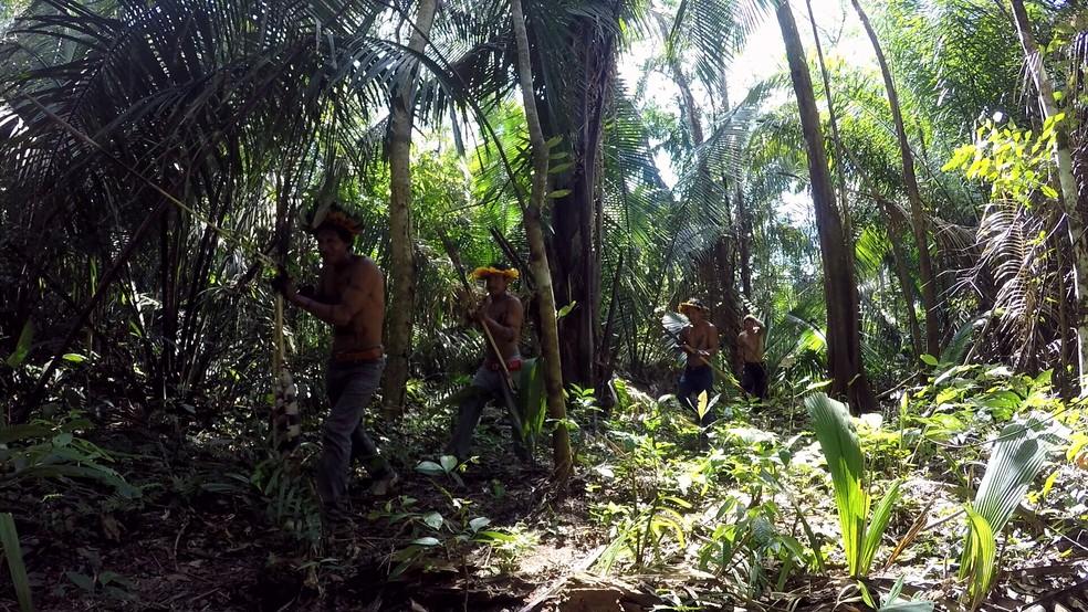 Casos confirmados do novo coronavírus entre indígenas chegam a 9.  — Foto: Reprodução/Rede Amazônica