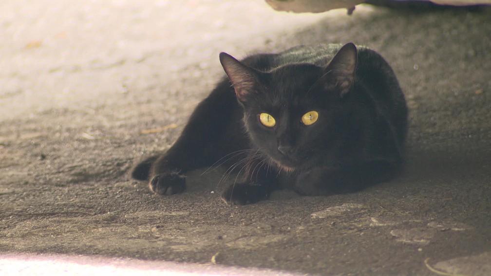 Mais de 30 gatos apareceram mortos em um condomínio na Gávea, na Zona Sul do Rio de Janeiro — Foto: Reprodução/ TV Globo