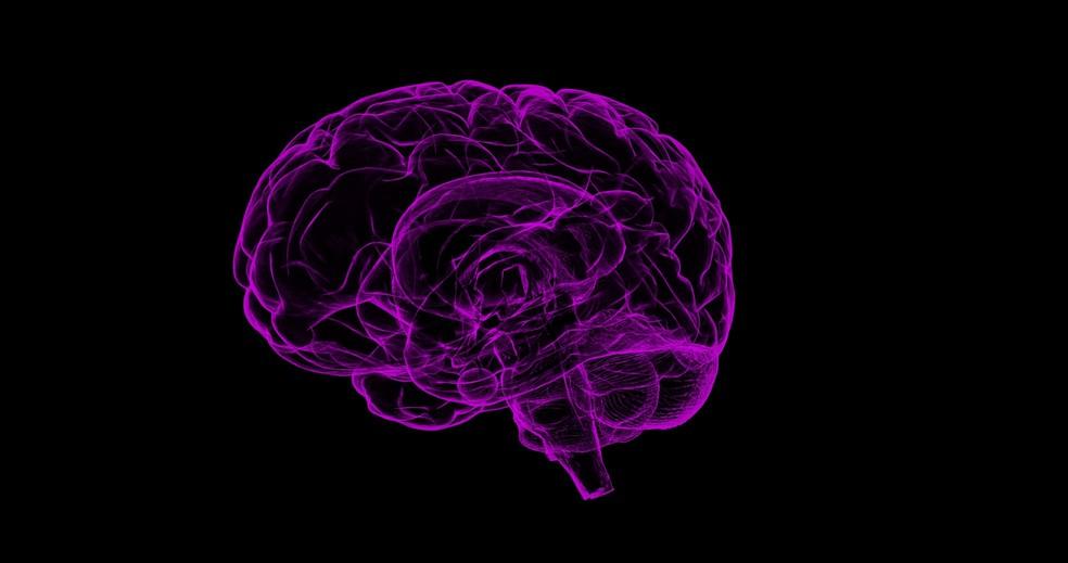 Cérebro (Foto: Sbtlneet /Pixabay/CC0 Creative Commons)