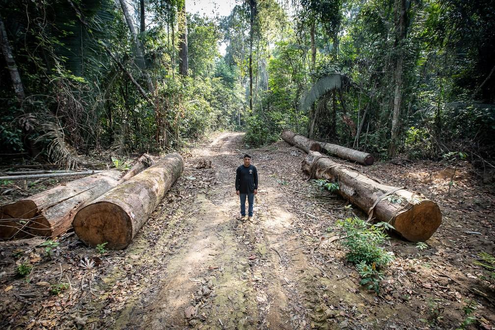 Batiti Karipuna ao lado de troncos derrubados em meio à terra indígena — Foto: Fábio Tito/G1