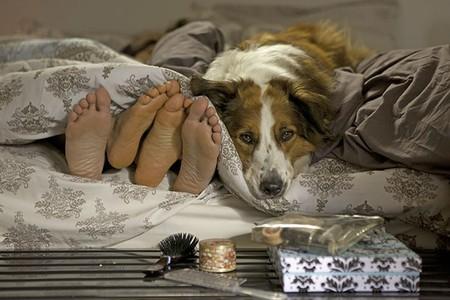 notícia Mato sem Cachorro