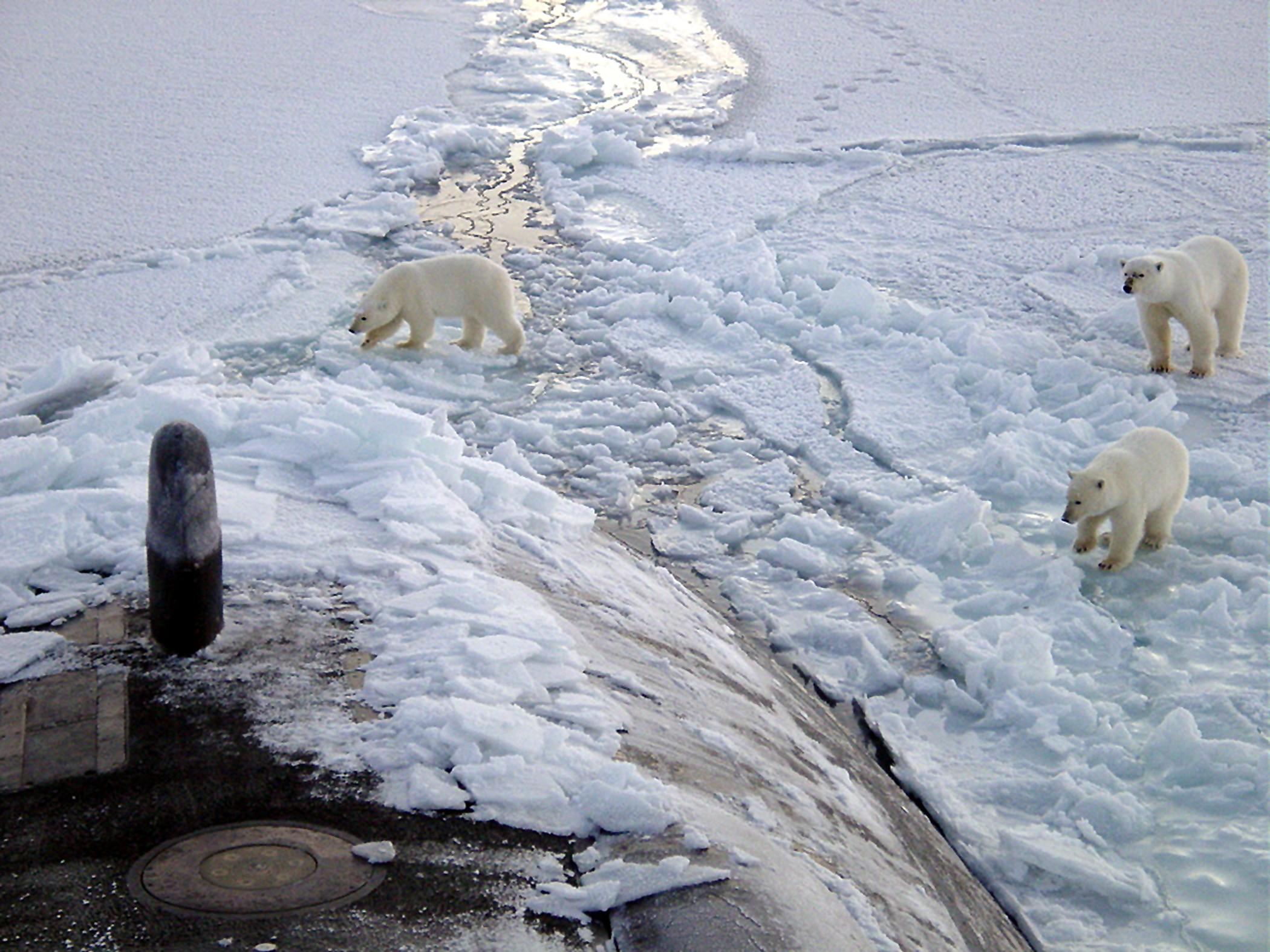 Ursos polares no Ártico (Foto: Wikimedia Commons )
