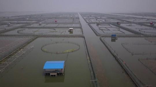 A Jornada da Vida - Rio Yangtsé: De cada 10 kg de peixes produzidos no planeta, 7 kg saem da China