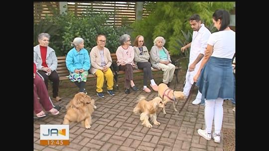 Projeto com cães estimula interação com idosos e crianças no Sul de SC