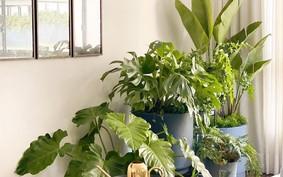 Jardim pequeno: 10 ideias para ter plantas em casas ou apartamentos