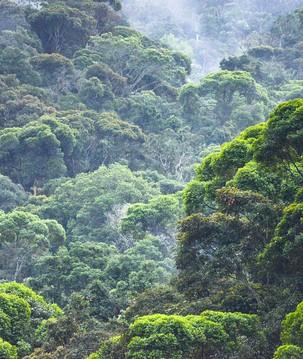 Mata Atlântica: as ameaças ao bioma e possíveis caminhos para restaurá-lo