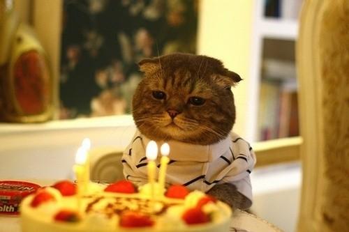Associação Americana de Felinos divide os gatos em seis categorias de estágio de vida  (Foto: Flickr/ Lawrencedesign/ Creative Commons )
