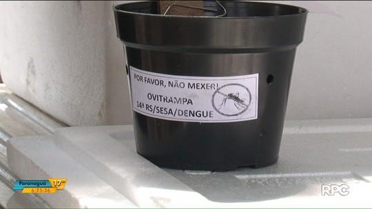 Cinco cidades do Paraná participam de pesquisa sobre eficácia de veneno contra o mosquito da dengue