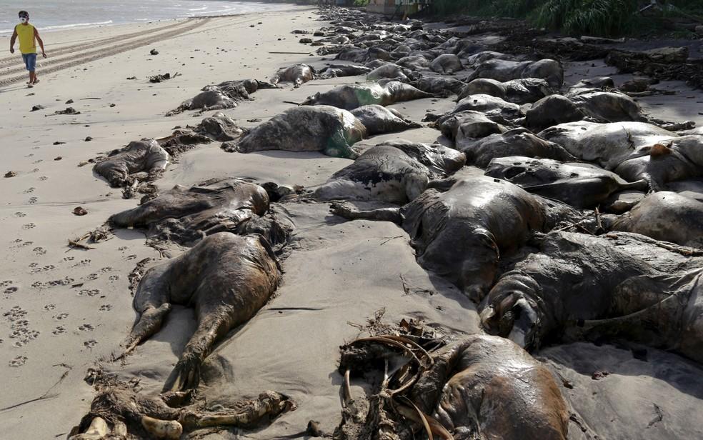 Carcaças de bois que estavam em navio que naufragou foram parar na praia do Conde em Barcarena, no Pará. (Foto:  Tarso Sarraf/Reuters)