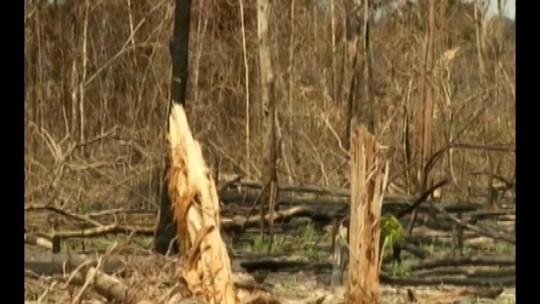 Pará é o estado com maior índice de desmatamento da Amazônia Legal, aponta Imazon
