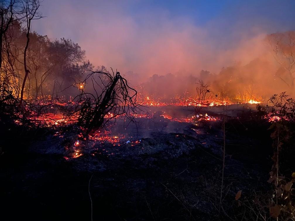 Voluntários do interior de SP enfrentam fogo e fumaça para resgatar animais feridos nas queimadas do Pantanal — Foto: Arquivo pessoal