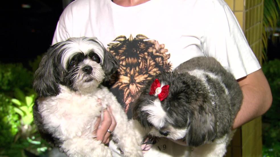 Cães foram recuperados após assaltantes serem presos pela polícia durante falso pagamento de resgate no Rio — Foto: Reprodução / TV Globo
