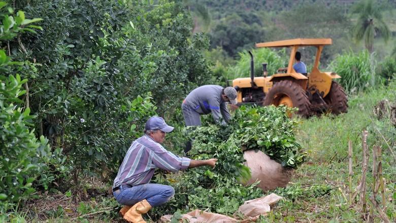 Brasil tem primeira fazenda de erva-mate com 100% de energia solar
