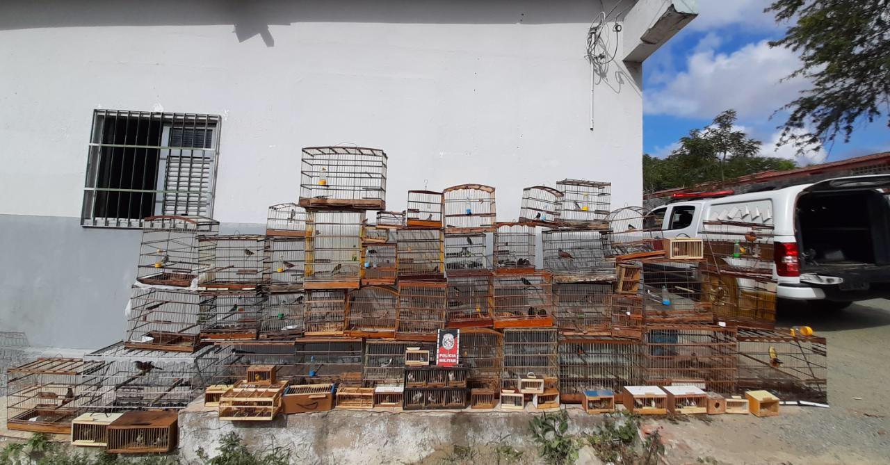 Mais de 100 pássaros são apreendidos pela PM na Feira da Prata, em Campina Grande