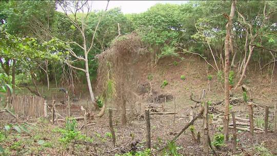 MP faz operação contra o desmatamento na Ilha de Itamaracá, PE