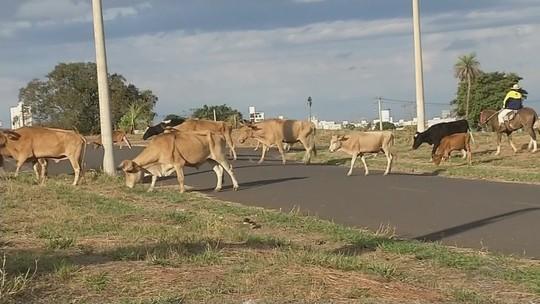Animais de grande porte são flagrados soltos em ruas e rodovias de Rio Preto