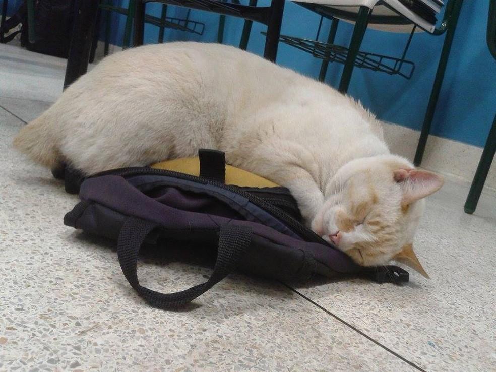 Branco dorme em cima da mochila de aluno — Foto: Arquivo Pessoal