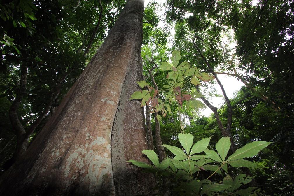 Biodiversidade ameaçada: um milhão de espécies de plantas e animais podem ser extintas — Foto: Divulgação/IEF