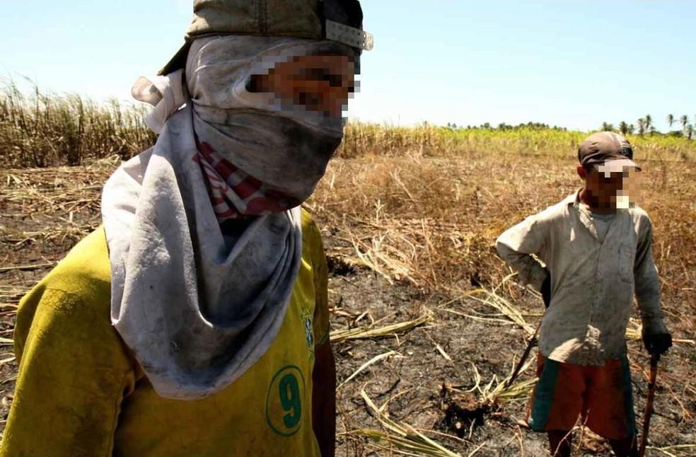 Crianças são flagradas em trabalho ilegal e degradante no interior do Ceará — Foto: TV Verdes Mares/Reprodução