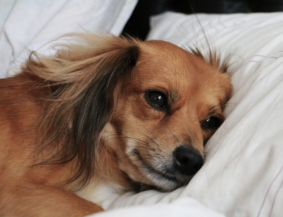 "Before bedtime, your dog is also ""worried"" about the problems of the day"