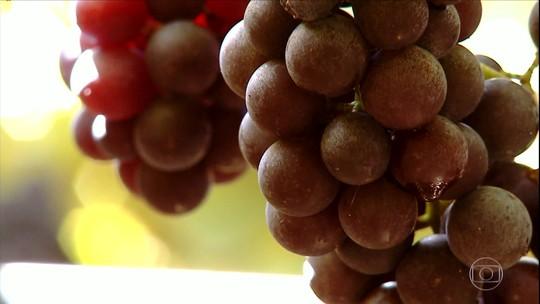 Safra de uva da Serra Gaúcha será menor em 2019