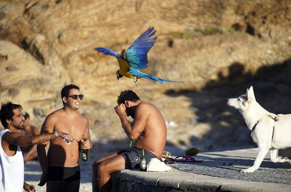 RJ, 29/05/2020 Arara adestrada foge de cachorro e voa entre amigos -- sem máscara -- conversando na Praia do Arpoador, na Zona Sul do Rio; — Foto: Marcos Serra Lima/G1